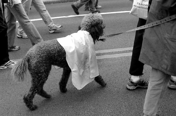 poodles for peace!...